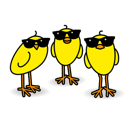 Three Cool Yellow Chicks wearing Sunglasses Staring towards camera on White Background