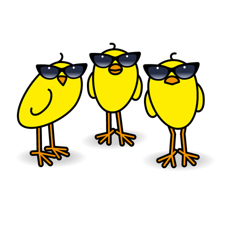 Three Small Cute Yellow Chicks wearing Retro Ladies Sunglasses Staring towards camera on White Background