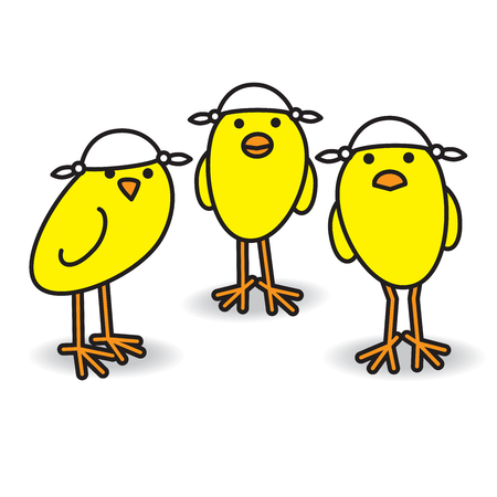 Three Yellow British Chicks wearing Knotted Handkerchiefs on Heads for Sun Protection while staring towards camera on white background