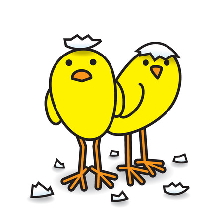 Two Cool for School Cute Freshly Hatched Yellow Chicks with Egg Shell Fragments Staring towards camera