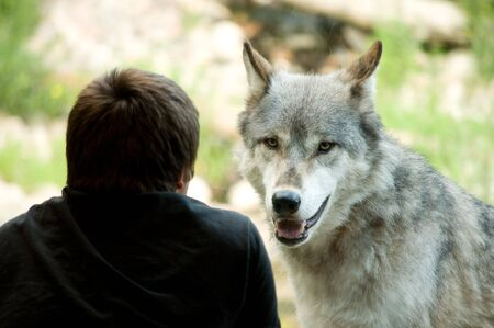 boy watching the wolf  watch him through glass photo