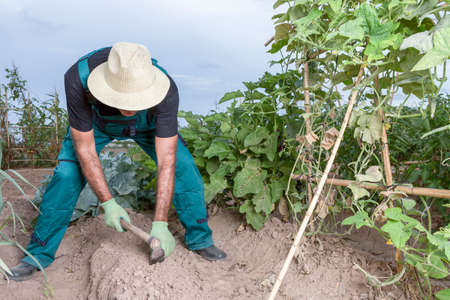 farmer sowing the land of his urban vegetable garden with a small hoe photo