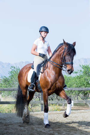 barn girls: young woman is riding a brown horse on a dressage session - focus on the face