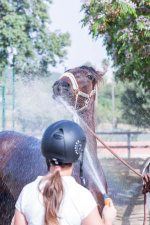 barn girls: horse is being given water by a young woman rider after a jumping session - focus on the horse head