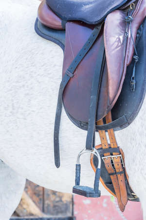 stirrup: detail of a leather saddle on a purebred white horse - focus on the stirrup