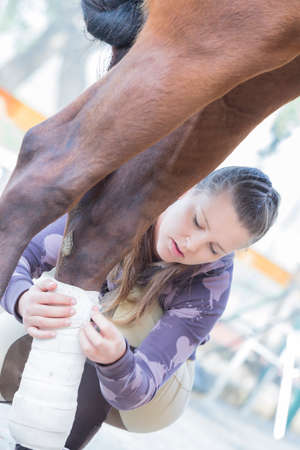 barn girls: girl is putting white bandages on a purebred brown horses legs at the byre - focus on the face