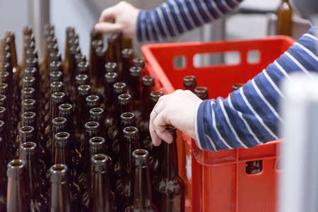 elaboration: Close-up of unrecognizable man taking empty bottles and putting it in container on a craft beer elaboration process