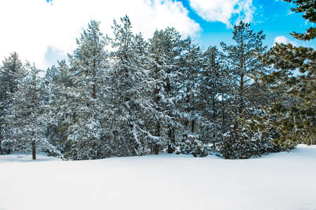 Beautiful winter landscape with snow covered trees with the blue sky. Useful as a background. Copy space area available