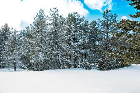 Schöne Winterlandschaft mit Schnee bedeckte Bäume mit dem blauen Himmel. Nützlich als Hintergrund. Kopieren Sie den verfügbaren Platzbereich