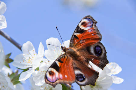 The spring, apple-tree costs in colours and the butterfly sits on a flower photo