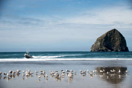 Seagulls and Dory Boat in front of Chief Kiawanda (Haystack) Rock in Pacific CIty, Oregon