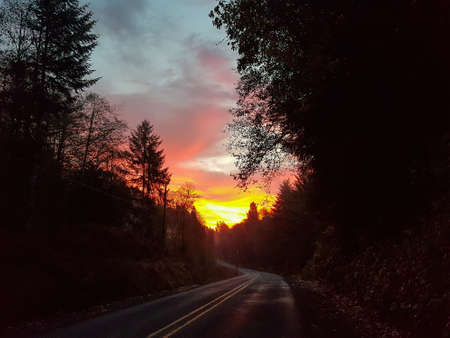 Winding road leads through woods into sunset in the coastal mountains of Oregon