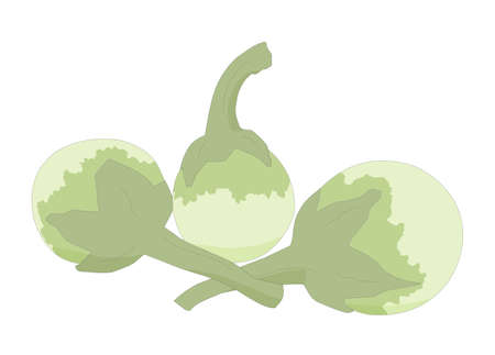 Eggplants are vegetable have nutrition and ingredients to cook, illustrations graphic