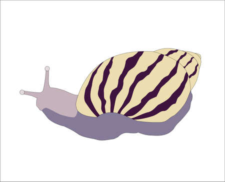 Snail is animal has move slow, illustrations vector