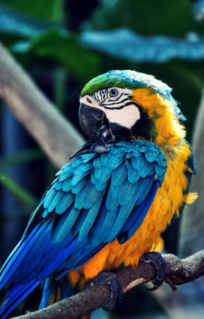 Colourful Macaw Bird on the branch tree photo