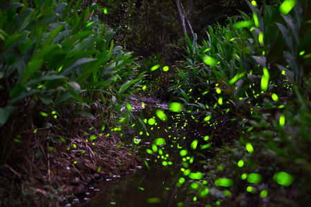 The forest is lit up by the darting fireflies