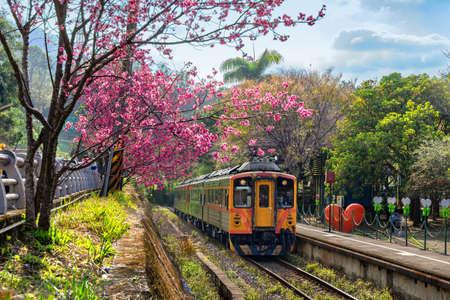 Train with cherry blossom at Neiwan railway in Hsinchu, Taiwan.