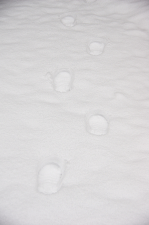 Footprints on the snow covered ground.