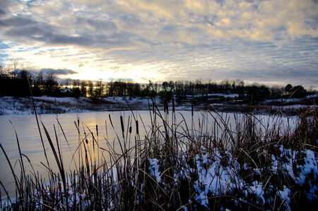 bulrushes: Bulrushes overlooking an ice covered lake at sunset. Stock Photo