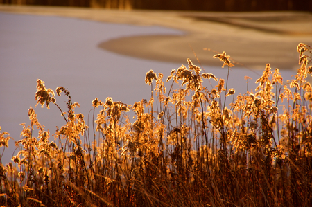 Sun rays thing through the weeds. Stock fotó