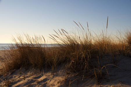 Sand dunes in the evening light at the seashore.