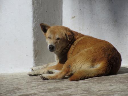 basking: A sleepy dog basking in the sun.