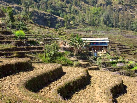 A hillside cut into terraces and prepared for planting.