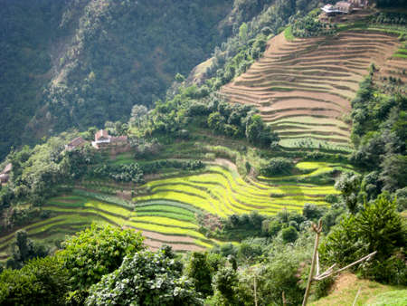 foothills: The terraced fields on the on Himlayan foothills in Nepal.
