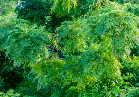 Lush green tree foliage in summer time.