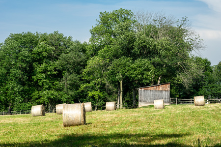 Some round hay bales resting in a hay field with trees in the background in the rural countryside. Stockfoto