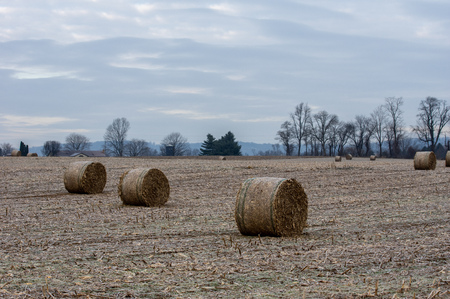 Some round corn fodder bales in the cornfield in wintertime.