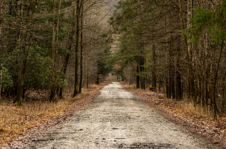 A dirt road in the woodland in the winter season.