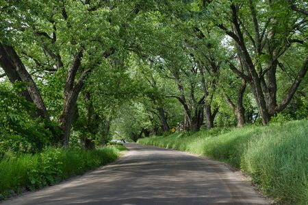 A beautiful tree lined road in the countryside.