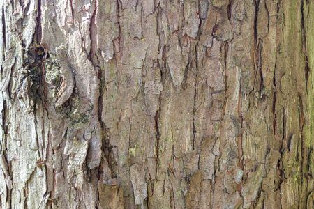 The shaggy bark background of a tree.