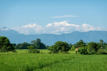 The beautiful green rice fields and snow covered mountains of Nepal.