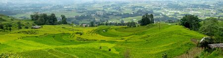 A panorama  of The beautiful green rice fields on the terraced side of a hill in Nepal. Stock Photo