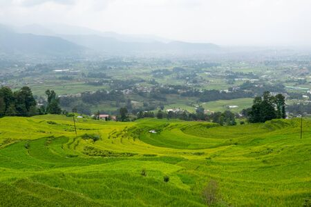 The beautiful green rice fields on the terraced side of a hill in Nepal.