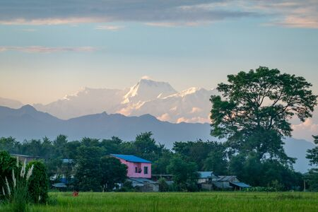 Living on the beautiful green plains in Nepal with the snow covered mountains in the background. Stock Photo