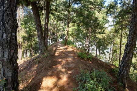 Trekking on a trail on the ridge of a mountain covered in pine trees.