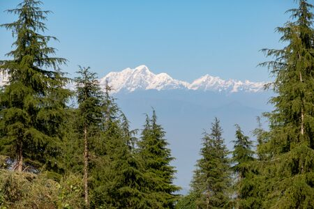 A background of the snow covered Himalaya Mountain Range in Nepal with pine trees in the foreground.
