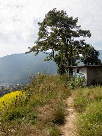 A deserted building on a mountaintop beside a field of mustard plants.