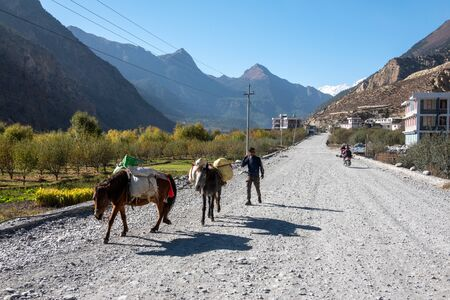 Mustang, Nepal - November 10, 2019: A man following two pack horses in the Mustang region of Nepal. Editöryel