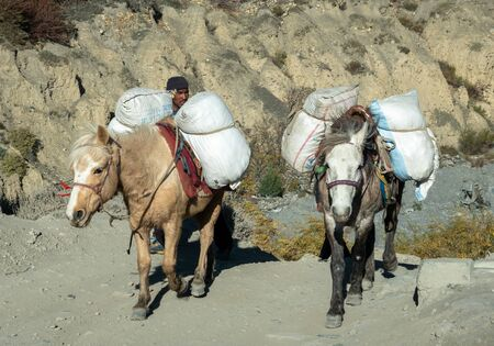 Mustang, Nepal - November 10, 2019: Two Pack Horses and their handlers in the mountains in the Mustang Region of Nepal. Editöryel