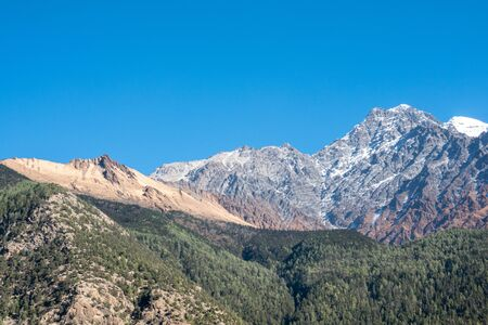 The beautiful pine covered hills with the snow peaks of the Himalayas in Nepal in the background.