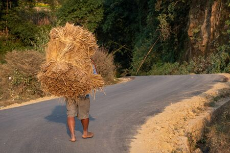 Nagarkot, Nepal - November 17, 2019: A man carrying a large bundle of rice from the field to the farm. Stok Fotoğraf