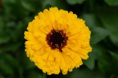 The beautiful yellow flowers in an outdoor garden.