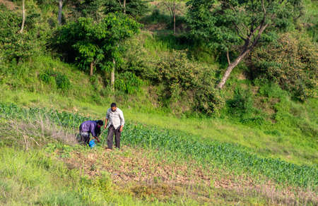 Kathmandu, Nepal - May 30, 2020: A Nepali man and woman working in the field.