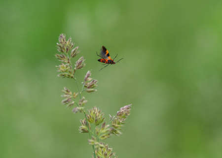 An insect taking flight from off a piece of grass in the field. Imagens