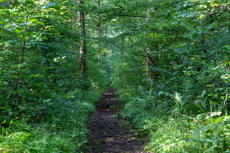 A trail or footpath in the green of the summer forest foliage. Imagens