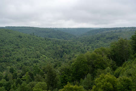 A high angle view of a wide expanse of wilderness forest.